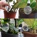 4pc/6pc Dispenser Gardening Pot Planters Watering Tools