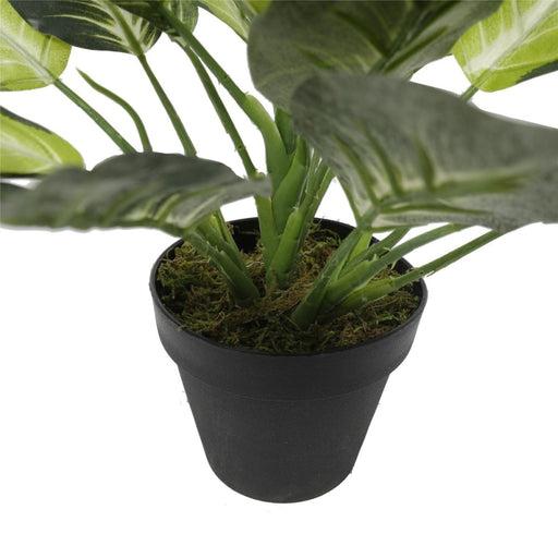 Leopard Lily (dieffenbachia) with Pot 40cm - Home & Garden >
