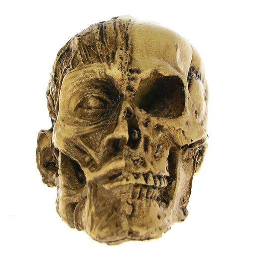 Human Anatomical Anatomy Skull Head Muscle Bone Male Medical Model Anatomical Medical Teaching Skeleton Statue Home Bar Decor