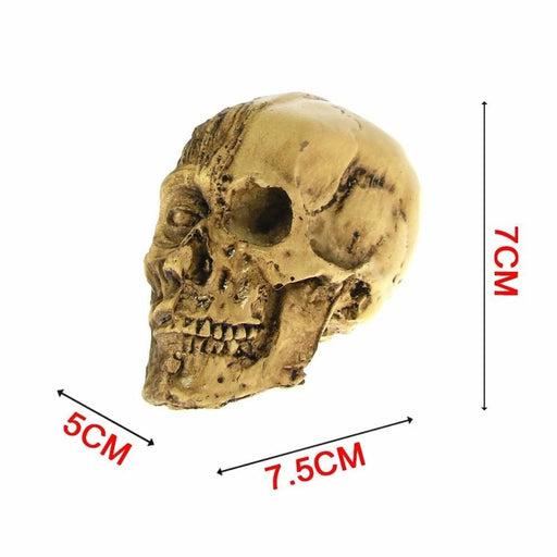 Muscle Skull Head - INTSKCRZ