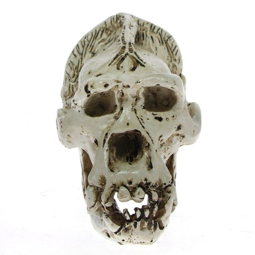 Teaching Quality Animal Model Pongo Pygmaeus Male Bornean Orangutan Skull Head Sumatran Resin Figurine Desk Scientific Sculpture