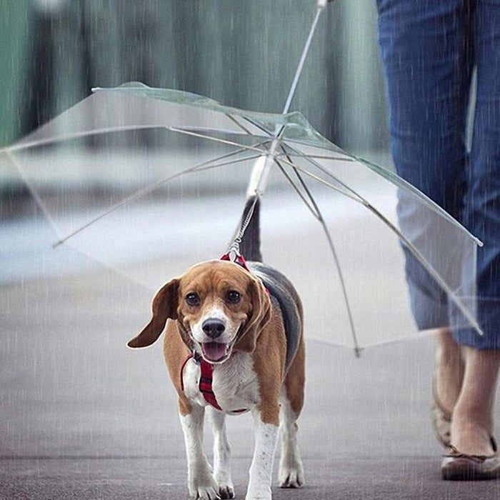 Pet Umbrella with Built-in Chain Leash goslash fast delivery fast delivery