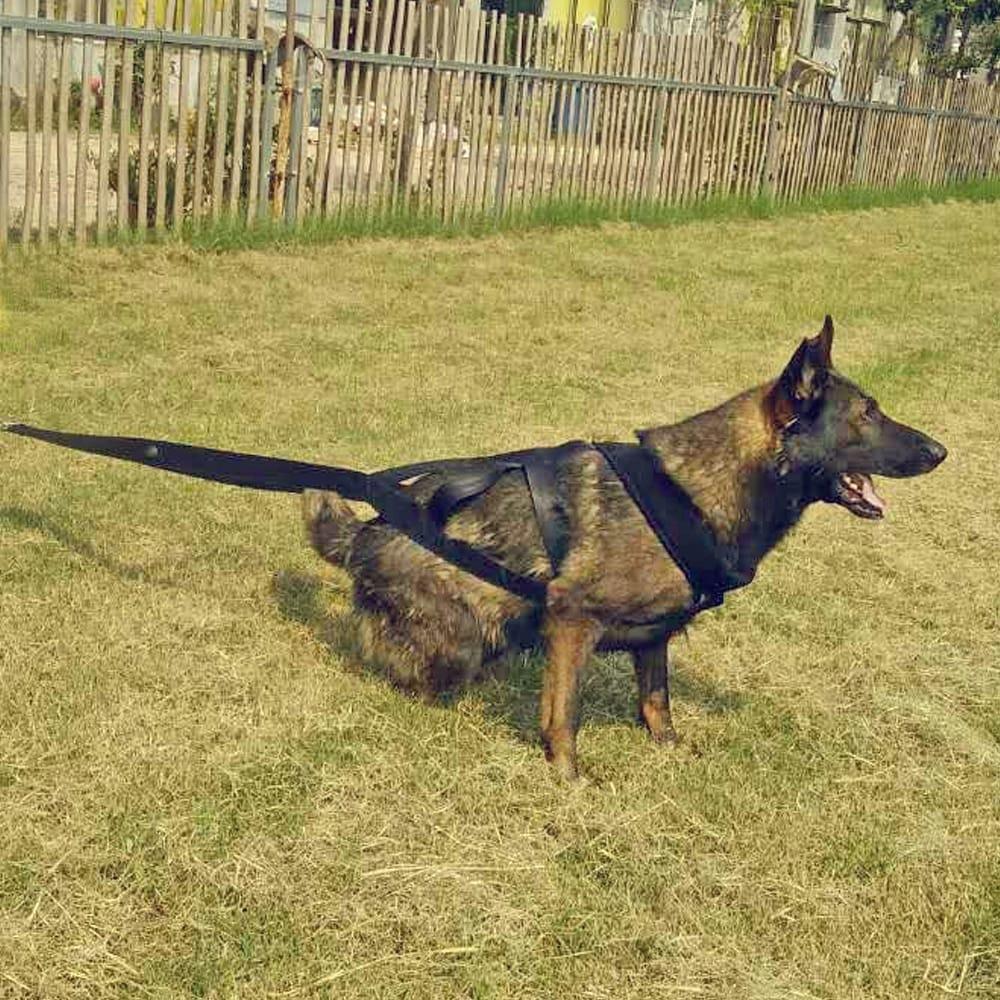Dog Training Product Supplier Toys K9 Dog Adjustable Treats
